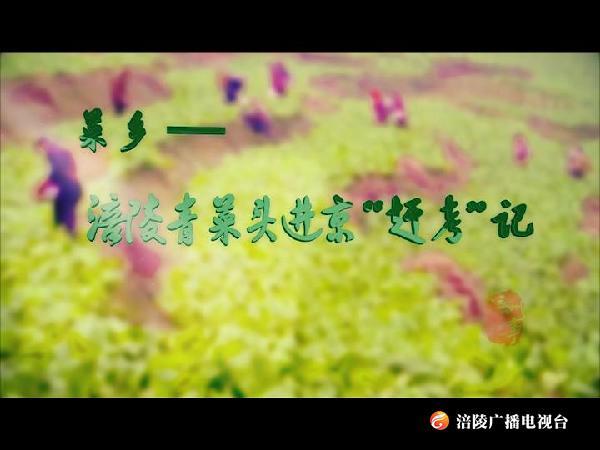 """【涪州纪事】涪陵青菜头进京""""赶考""""记"""