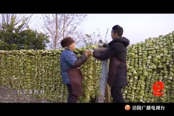 【涪州纪事】《涪陵汉子榨菜情》
